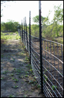 photo of fencing to exclude feral pigs