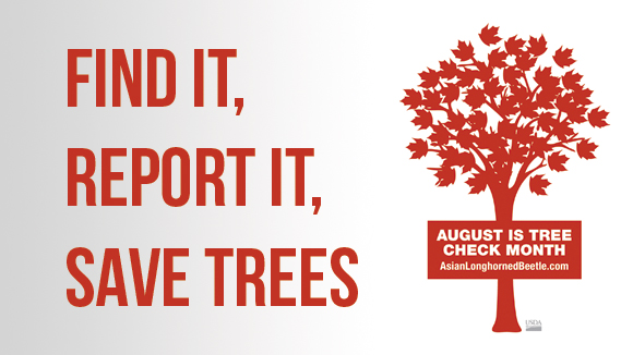 August is Tree Check Month