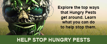 Hungry Pests, The Threat