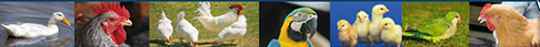Banner with bird pictures