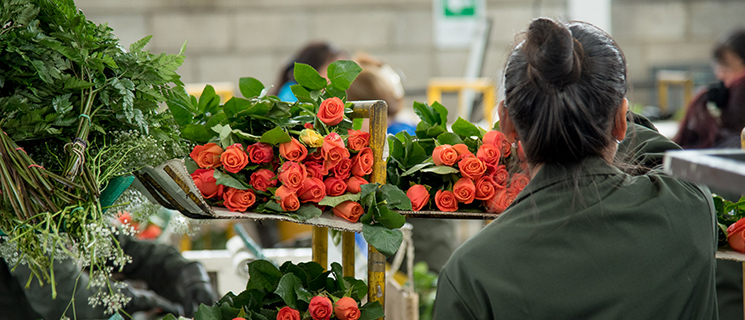U.S. Checks Colombia's flower market daily exports to the U.S.