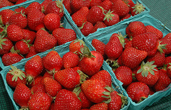 In 2016, PPQ helped open China's first-ever market for California fresh strawberries, valued at $50 million over the first three years.