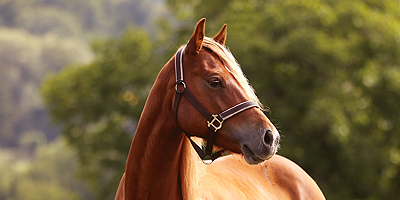 Protecting the Health of America's Horses