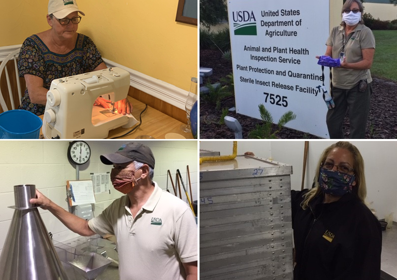 Robin Dunivin (top left photo) volunteered to make cloth masks for employees at the Sterile Insect Release Facility in Sarasota, FL, as well as for other PPQ personnel in Florida.