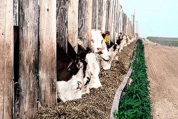 Cattle Health Surveillance