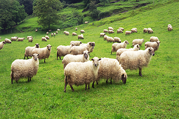 Zoonotic Diseases of Sheep and Goats