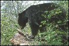 photo of bear in woods