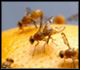 Fruit fly Treatments