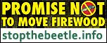 stopthebeetle.info