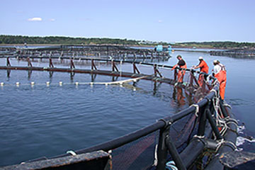 VS Aquaculture Program and Services for the US Aquaculture Industry Sectors