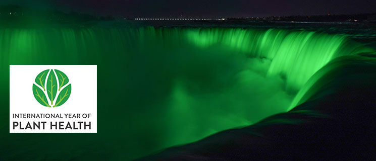 Niagara Falls glows green to emphasize the need to protect plant health