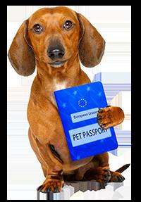 USDA APHIS | Pet Passports - European Union