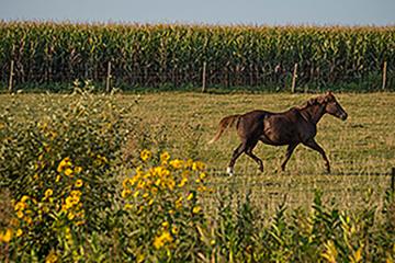 USDA APHIS | Contagious Equine Metritis (CEM)