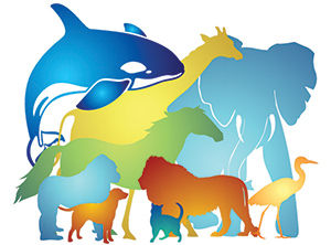 Multi-colored collection of animals used for the Animal Welfare Act