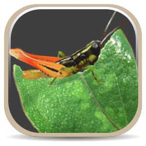 USDA APHIS | Free mobile apps put identification tools in your hand
