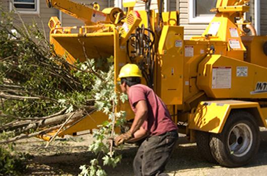 A tree crew uses a wood chipper to dispose of tree debris.