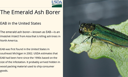 InfoBox EAB Story Map