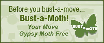 Your Move Gypsy Moth Free